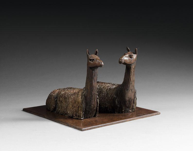 lama, pérou, amérique latine