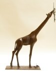 Girafe, Afrique